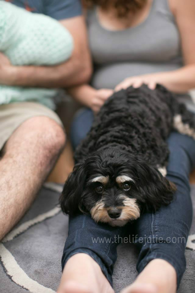 Our sweet dog, Macie!